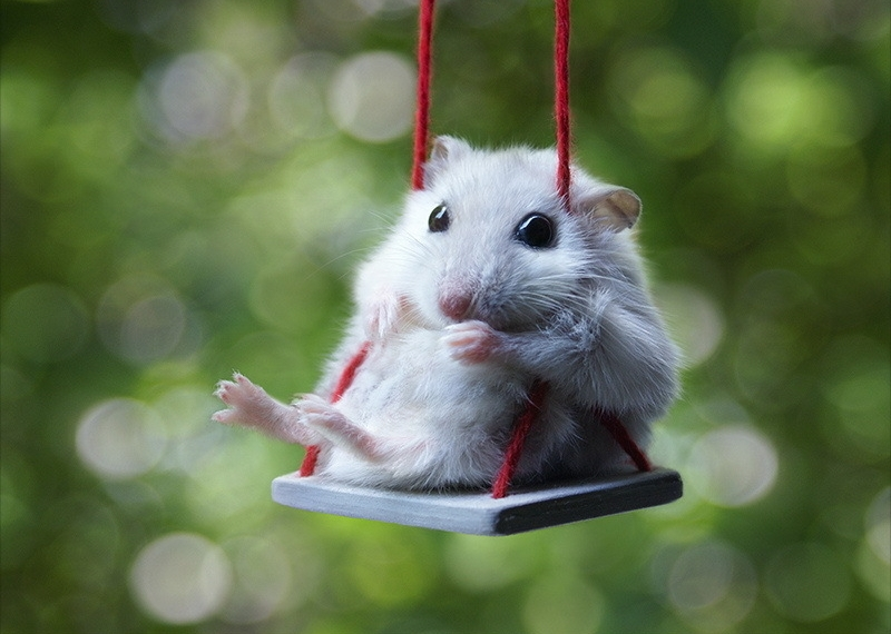 Mouse Swing
