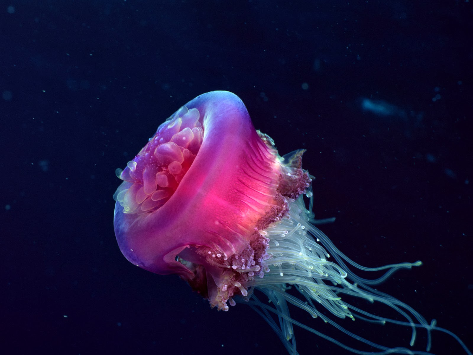 knowmorex.blogspot.com) Deep Sea Animals (4) - Squee! for Cute Deep Sea Creatures  173lyp
