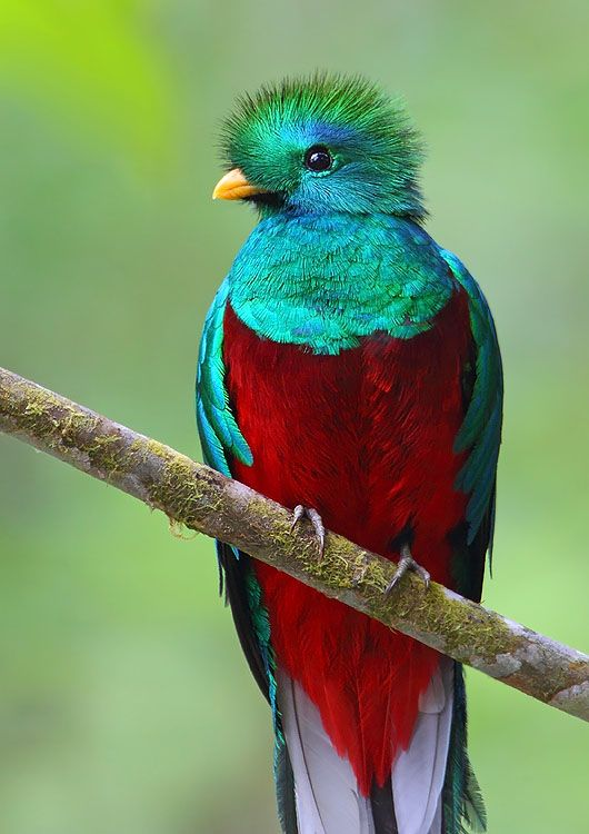 Brilliantly Colored Birds - Squee!