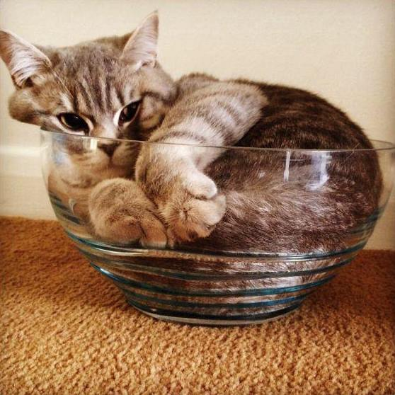 The Funny Picture These Photos Prove Cats Are In Fact Liquid 24