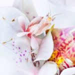 white.orchid2