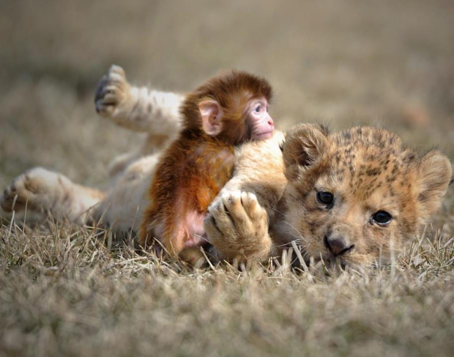 Image of: Gif Unlikely Animal Friends Pt Squee
