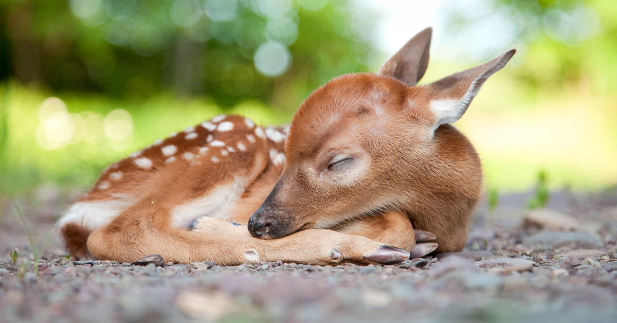 bambi squee