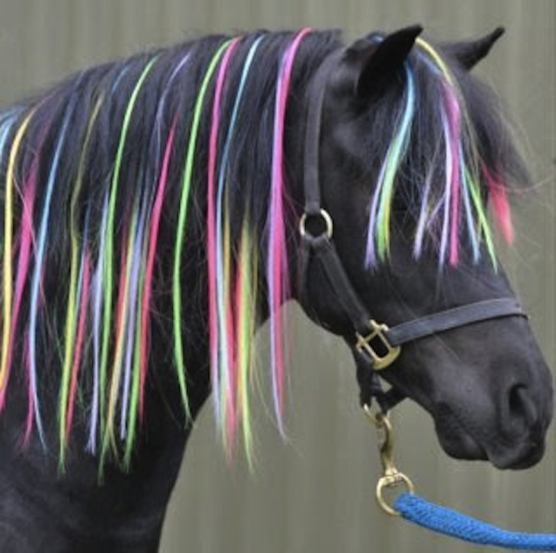 Hair Extensions For Horses Squee