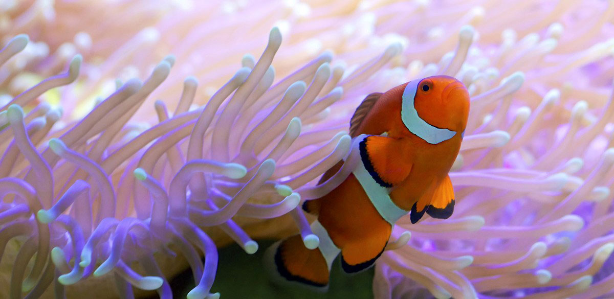 is that you nemo squee